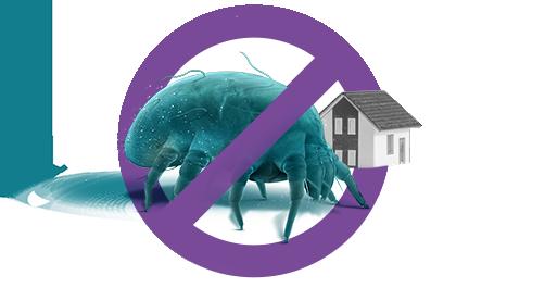 dust-mite-treatment